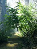 Sequoia_26_bg_092103
