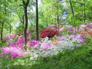 Us_national_arboretum_azaleas_600x