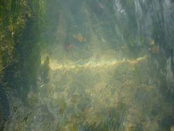 Waterreflection_eddievanw